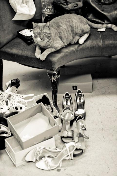 Viele Schuhe, schöne Cauch und eine Katze sind für Fotoshooting wichtig